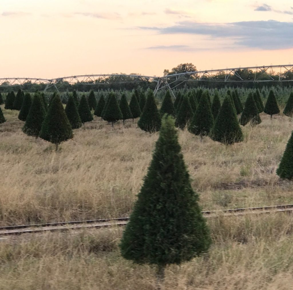 Christmas Tree Farm at Dewberry Farm