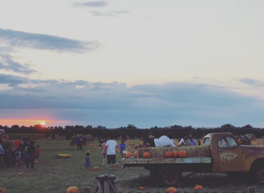 Dewberry Farm Pumpkin Patch