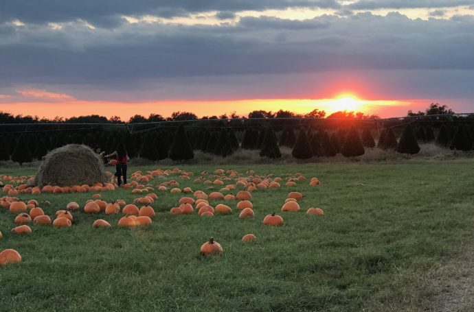 Sunset at Dewberry Farm Pumpkin Patch